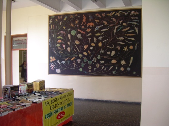 A mural of the evolutionary tree in the biology department at Istanbul University.